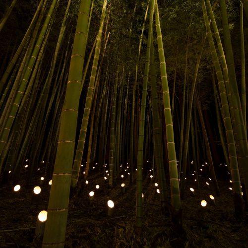 那須芦野竹灯り